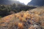 Chisos Mountain Basin (1)
